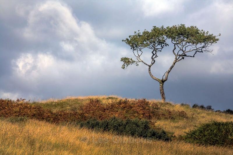 skye Tree3_edited-1 - Highlands and Islands