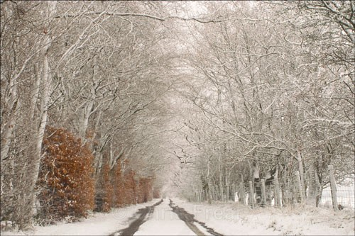 Morton Lane in Winter - Around Thornhill