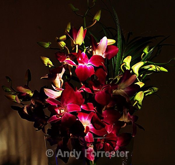 Orchid - Low Light Flowers