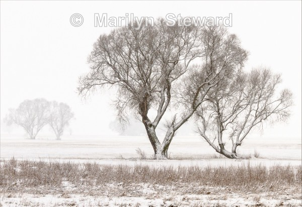 Trees in the snow - Exhibition acceptances